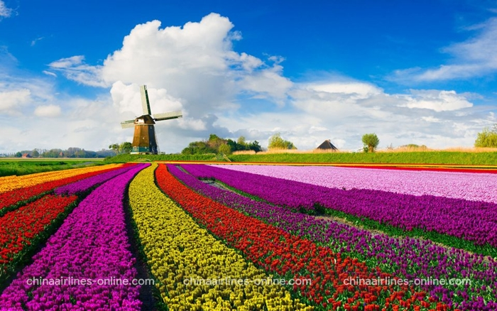 Cánh đồng hoa tulip Keukenhof ở lisse