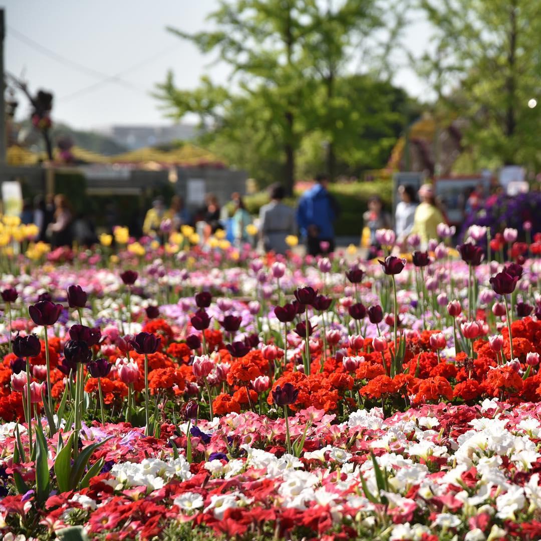 Công viên Ilsan