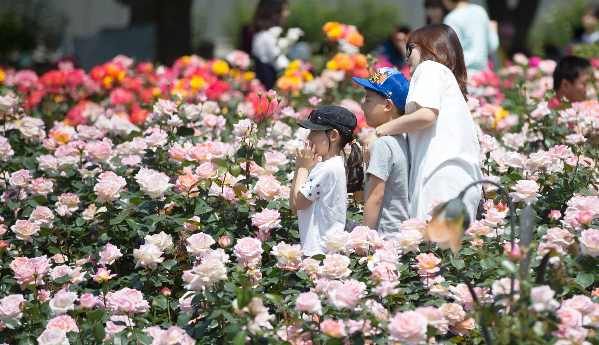Lễ hội hoa hồng ở công viên Olympic