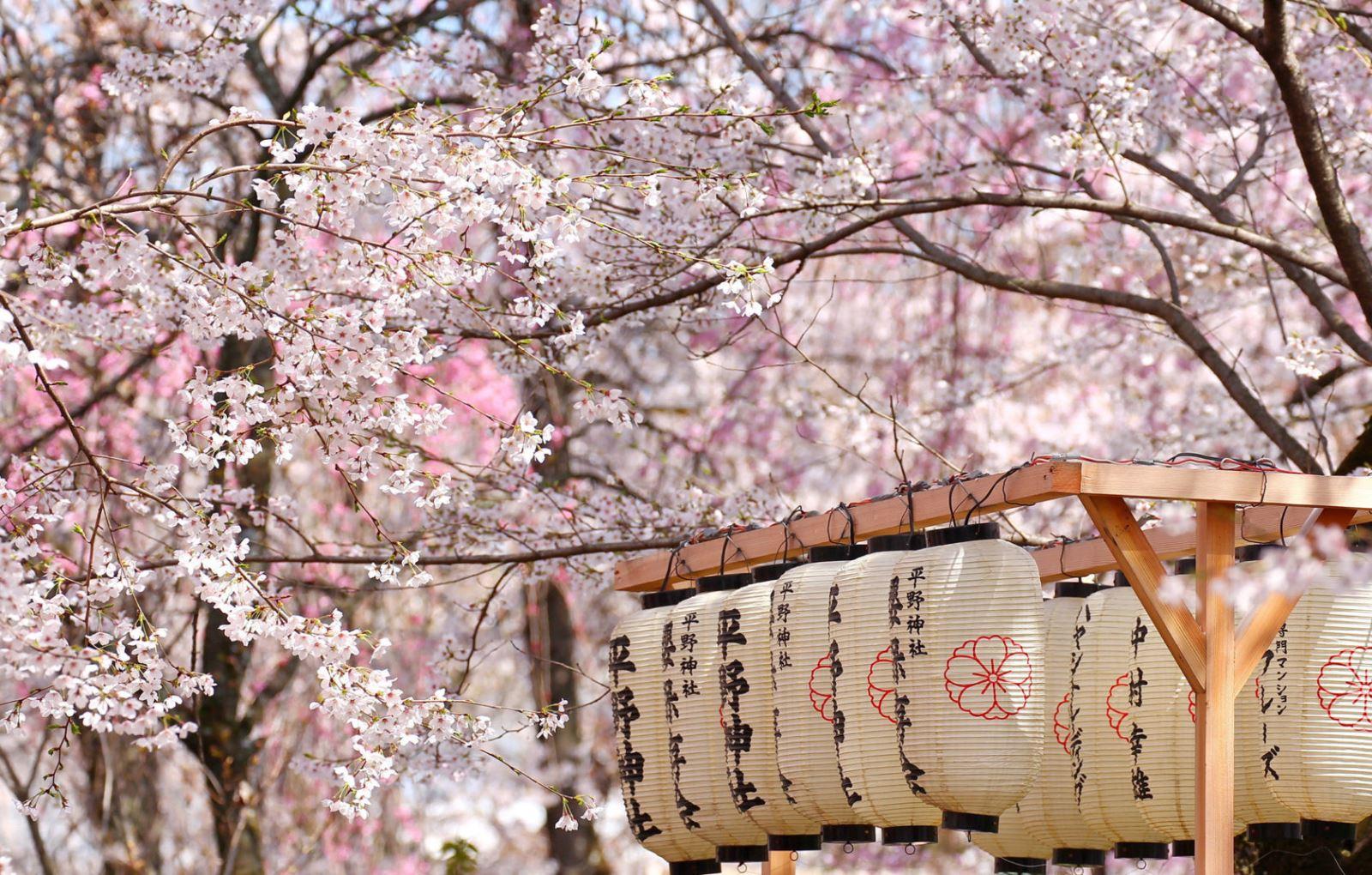 Lễ hội hoa anh đào ở Nhật Bản vào mùa xuân