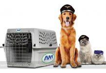 Quy định về vận chuyển thú cưng của China Airlines